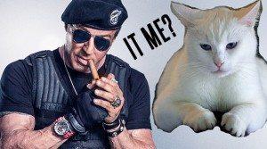 Elizabeth Banks Whohaha-Cat