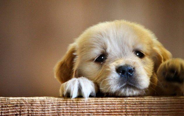 Elizabeth Banks Whohaha-Puppy