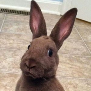 This side-eyeing bunny.